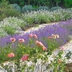 Garden Quinta das Lavandas (3)