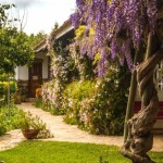 West Wing with Wisteria 2544