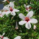 garden flowers (2)