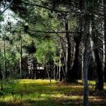 38 SÍTIO DAS ROLAS - Private pine forest with several picnic spots