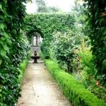7 Jardim e japoneiras - Cópia