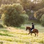 HORSES2(©Ash James)