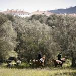 HORSES_HERDADE_BARROCAL_010416_3596