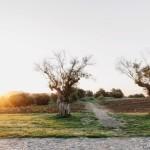 LANDSCAPE2(©Alex Reyto)