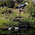 S 50 SELÃO  - Charca com cisnes e Pavilhão do Café PERTO DO  PARAÍSO