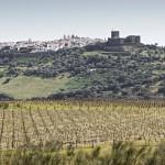 WINE1(©Nelson Garrido)