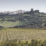 WINE_HERDADE_BARROCAL_010416_3702