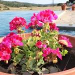 florespiscina