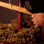 WINE HARVESTING_Carmos Boutique Hotel_PSP6039