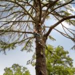 Tree_climbing_[6476-A4]