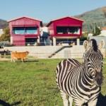 Quinta_05_Zebra