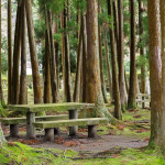 Picnic area in forest with table and benches